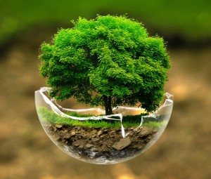 Bonsai-tree-in-a-broken-glass-bowl_www_EpicWpp_com_